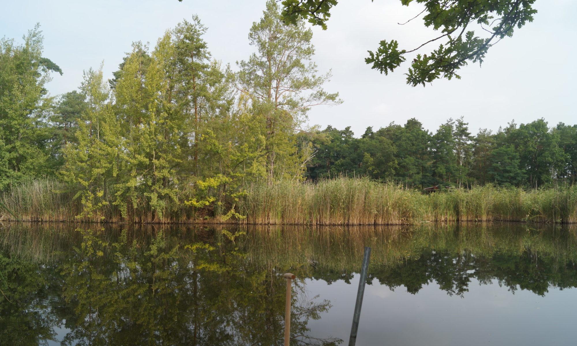 Ferienhaus Waldsee